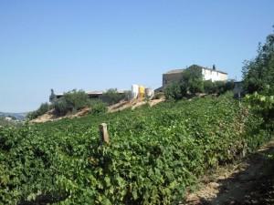 casolare re sole vanaf wijngaarden 300x225 huis kopen in Italïe