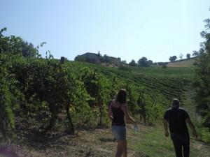 casolare re sole wijngaarden 300x225 Aan de slag