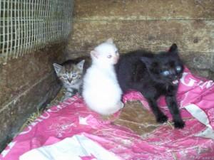 jonge katjes@casolareresole 04 300x225 Planten en dieren