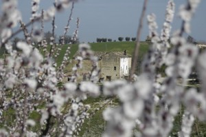 ons huis vanaf de bloeiende boomgaard 300x199 Vooruitgang