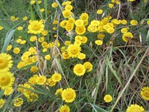 bloemetjes02 300x225 Bloemen en planten