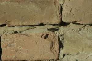 sprinkhanen mannetje en vrouwtje 02 300x199 Nog meer beestjes