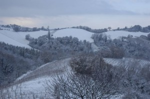 ons terrein in de sneeuw 01 300x199 Winter in Le Marche I