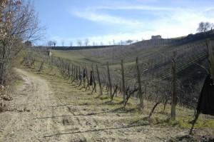 eerste week februari de jassen en truien kunnen uit 300x199 Druiven snoeien II