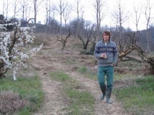 weghalen boomgaard 08 300x225 De boomgaarden gaan weg