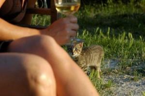 Vico wil ook een wijntje proberen maar is nog geen 161 300x199 Ouders op bezoek