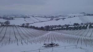 wijngaarden Cherri in de sneeuw 300x168 Sneeuw, sneeuw en nog eens sneeuw