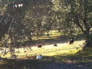 Lekker in de olijfboomgaard 300x224 Een nieuw seizoen breekt aan